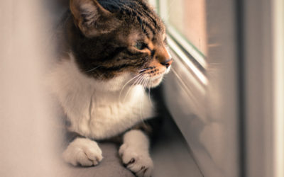 Cats: In or Out?