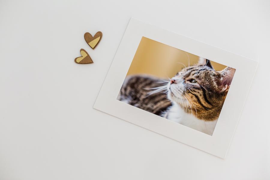 Ein hochwertiger Ausdruck auf Kunstpapier ist in keinster Weise mit der Bildansicht auf einem Monitor zu vergleichen.